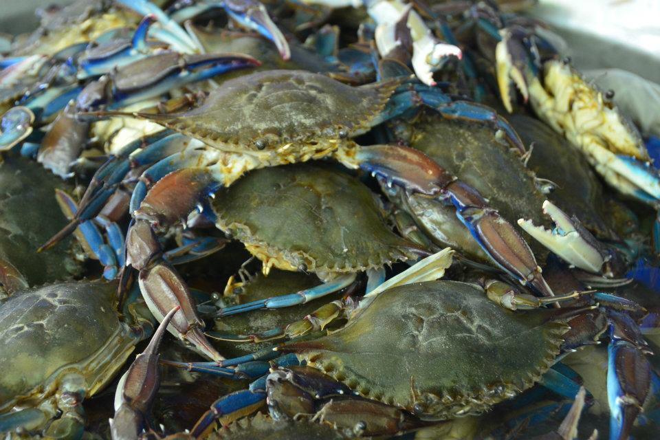 Western pacific coast el tunco little malteser on tour for Fish store reno
