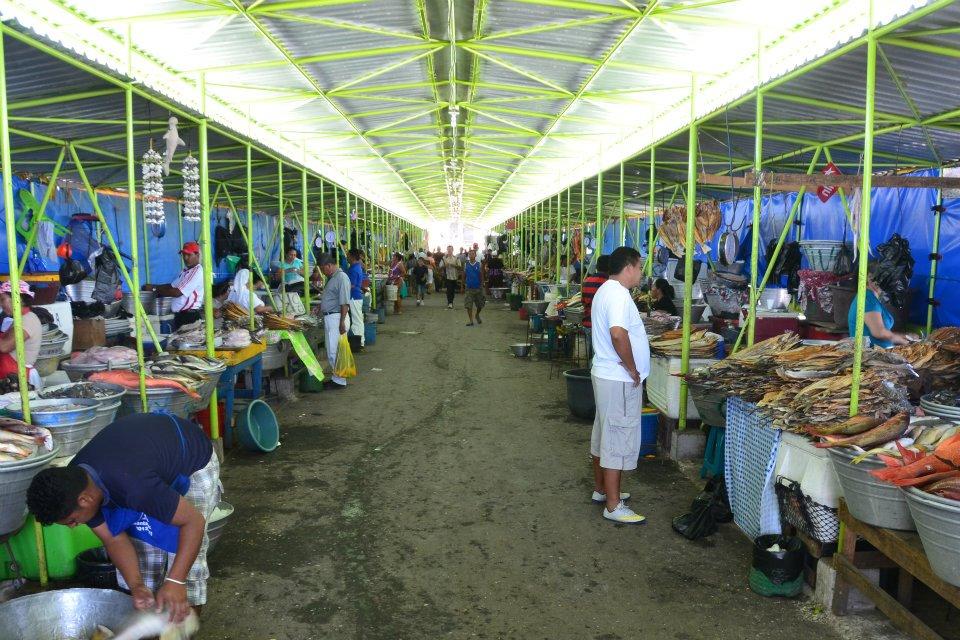 Western pacific coast el tunco little malteser on tour for La fish market